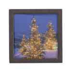 Christmas trees, Park City, Wastch Mountains, 2 Gift Box