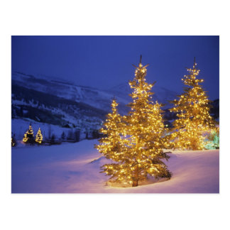 Christmas trees, Park City, Wastch Mountains, Postcard