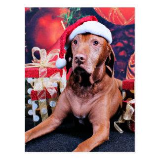 Christmas - Vizsla - Budda Postcard