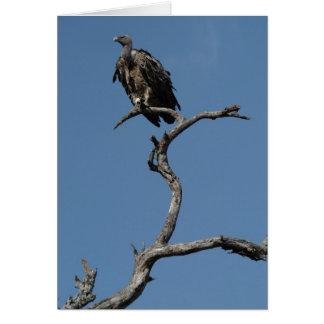 Christmas Vulture Card