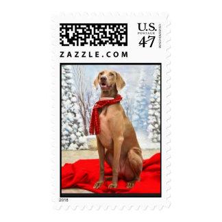 Christmas Weimaraner Stamps/Cards Postage Stamp