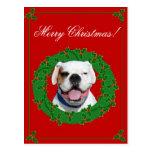 Christmas White Boxer postcard