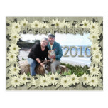 Christmas - White Poinsettas - Williams Photo 3 Postcard