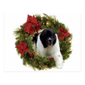Christmas Wreath Newf Landseer Postcard