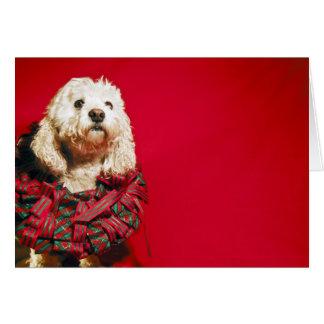 Christmas wreath white dog card
