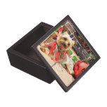 Christmas - Yorkie - Kinsey Premium Gift Box