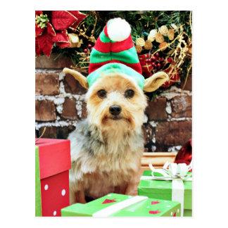 Christmas - Yorkie - Vinnie #32 Postcard