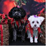 Christmas - YorkiePoo Hawnah - Maltese Annie Photo Sculpture