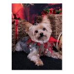Christmas - Yorkshire Terrier - Vinnie Post Card