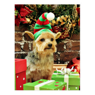 Christmas - Yorkshire Terrier - Vinnie Post Cards