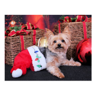 Christmas - Yorkshire Terrier - Vinnie Postcard