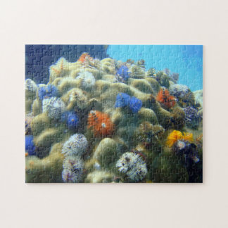 Christmastree Worms onto Coral Jigsaw Puzzle
