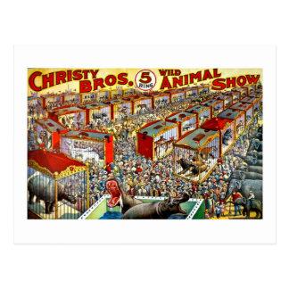 Christy's Wild Animal Show - Vintage Postcard