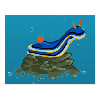 Chromadoris Nudibranch Postcard