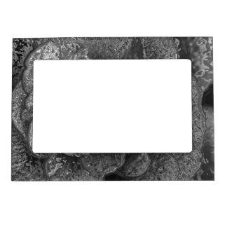 Chrome Rose Black and White Frame Magnetic Photo Frame