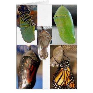 Chrysalises de la mariposa de monarca tarjeta de felicitación