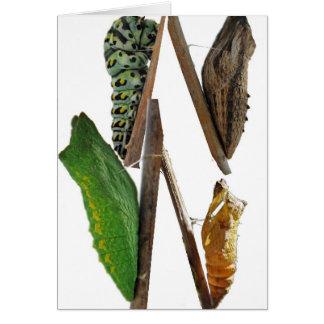 Chrysalises de la mariposa del swallowtail del tarjeta de felicitación