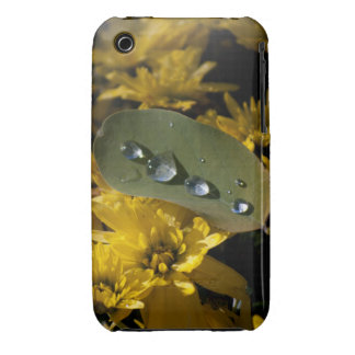 Chrysanthemum And Drops iPhone 3G GS Case iPhone 3 Case-Mate Case