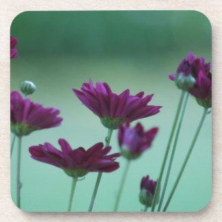 Chrysanthemum and meaning beverage coaster