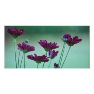 Chrysanthemum and meaning custom photo card