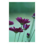 Chrysanthemum and meaning stationery