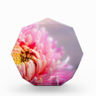 chrysanthemum award