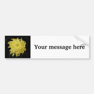Chrysanthemum Car Bumper Sticker