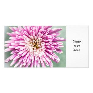 Chrysanthemum flower closeup photo card