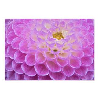 Chrysanthemum flower decorating grave site in photo art