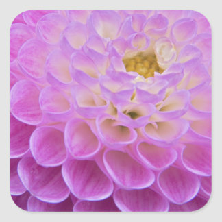 Chrysanthemum flower decorating grave site in square sticker