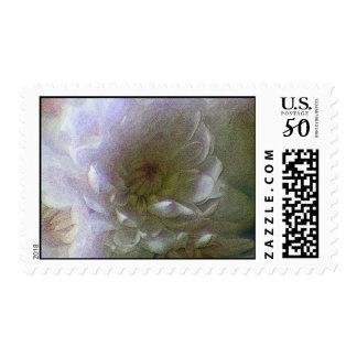 Chrysanthemum Flower  Postage/Stamp Postage