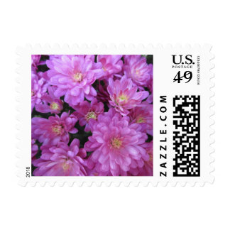 Chrysanthemum Group Plant Purple Postage Stamps