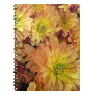 Chrysanthemum Group Plant Yellow Red