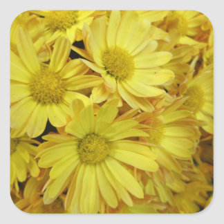 Chrysanthemum Group Plant Yellow Square Stickers
