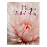 Chrysanthemum  - Happy Mother's Day Customized Postcard
