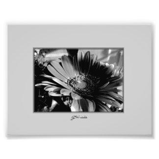 Chrysanthemum in Black and White Photo Print