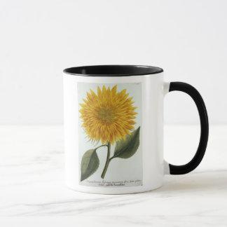 Chrysanthemum Indicum from 'Pythanthoza Iconograph Mug