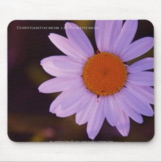 Chrysanthemum leucanthemum mouse pad