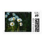 Chrysanthemum leucanthemum postage stamps