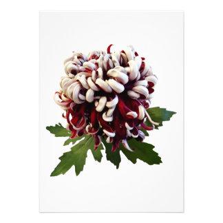 Chrysanthemum Lili Gallon Personalized Invite