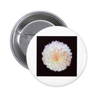 Chrysanthemum Pinback Button