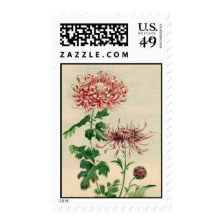 Chrysanthemum Postage