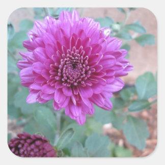 Chrysanthemum Purple Floral Square Stickers