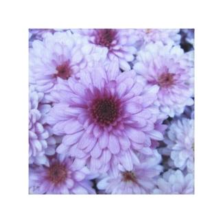 Chrysanthemum Purple White