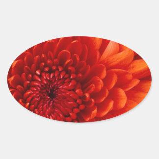 Chrysanthemum. Test Oval Sticker