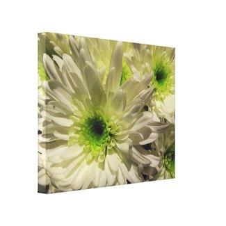 Chrysanthemums wrappedcanvas