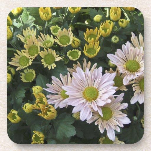 Chrysanthemums Coasters