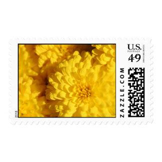 chrysanthemums in fall postage stamp