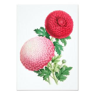 Chrysanthemums, Lady Talfourd and Purpurea Elegans 5x7 Paper Invitation Card