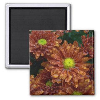 Chrysanthemums Fridge Magnet
